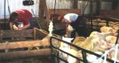 Family Shearing